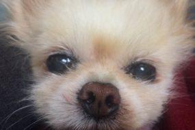 My dog Stanley Kubrick has passed away.